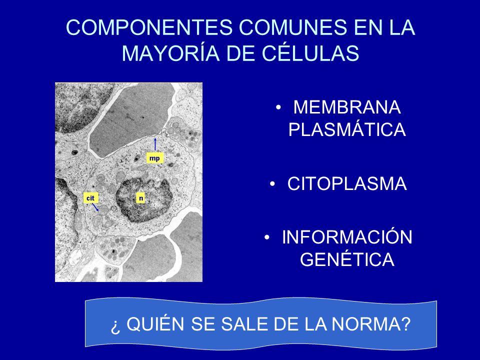COMPONENTES COMUNES EN LA MAYORÍA DE CÉLULAS MEMBRANA PLASMÁTICA CITOPLASMA INFORMACIÓN GENÉTICA ¿ QUIÉN SE SALE DE LA NORMA?