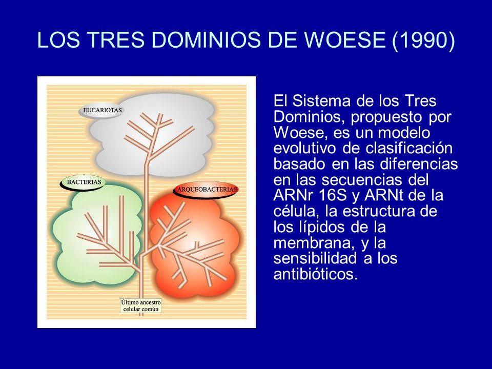 LOS TRES DOMINIOS DE WOESE (1990) El Sistema de los Tres Dominios, propuesto por Woese, es un modelo evolutivo de clasificación basado en las diferenc