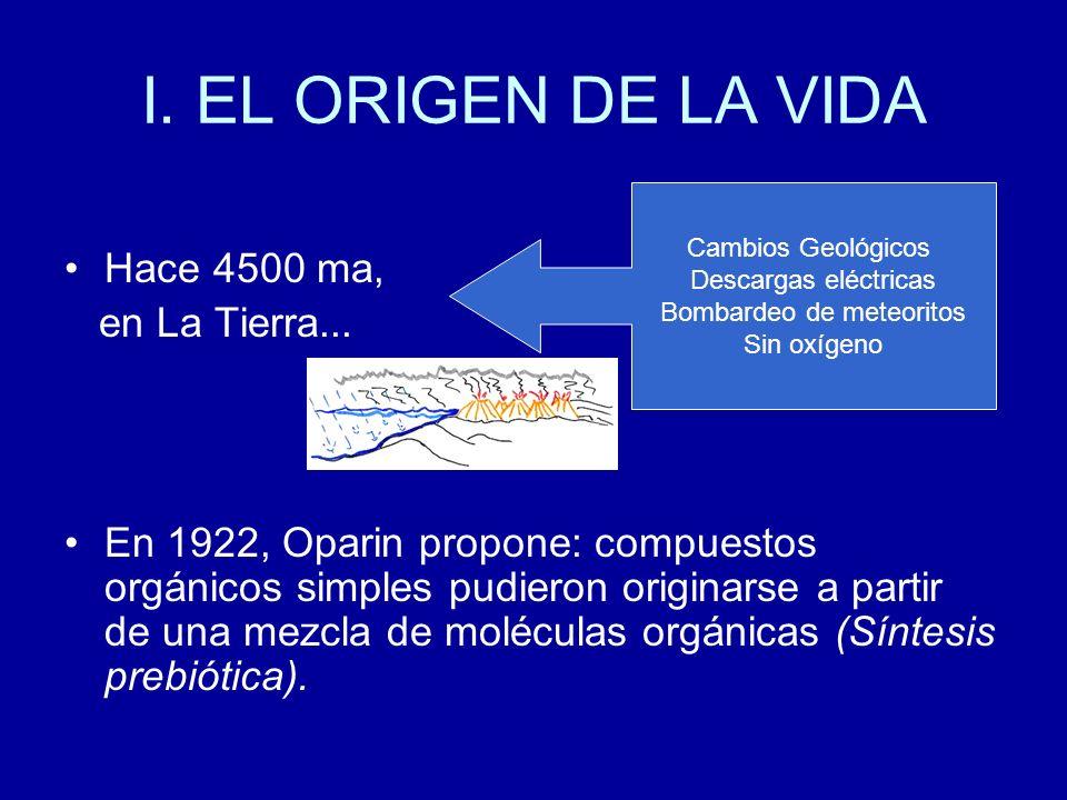 I. EL ORIGEN DE LA VIDA Hace 4500 ma, en La Tierra... En 1922, Oparin propone: compuestos orgánicos simples pudieron originarse a partir de una mezcla