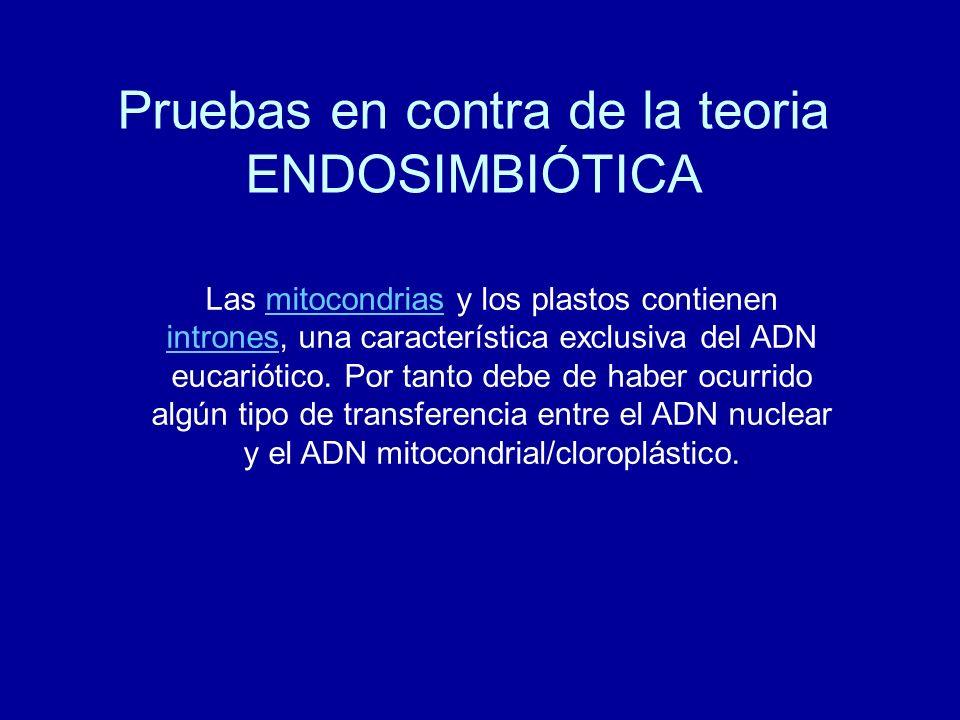Pruebas en contra de la teoria ENDOSIMBIÓTICA Las mitocondrias y los plastos contienen intrones, una característica exclusiva del ADN eucariótico. Por