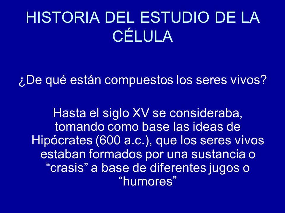 HISTORIA DEL ESTUDIO DE LA CÉLULA ¿De qué están compuestos los seres vivos? Hasta el siglo XV se consideraba, tomando como base las ideas de Hipócrate