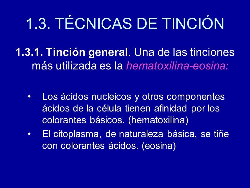 1.3. TÉCNICAS DE TINCIÓN 1.3.1. Tinción general. Una de las tinciones más utilizada es la hematoxilina-eosina: Los ácidos nucleicos y otros componente