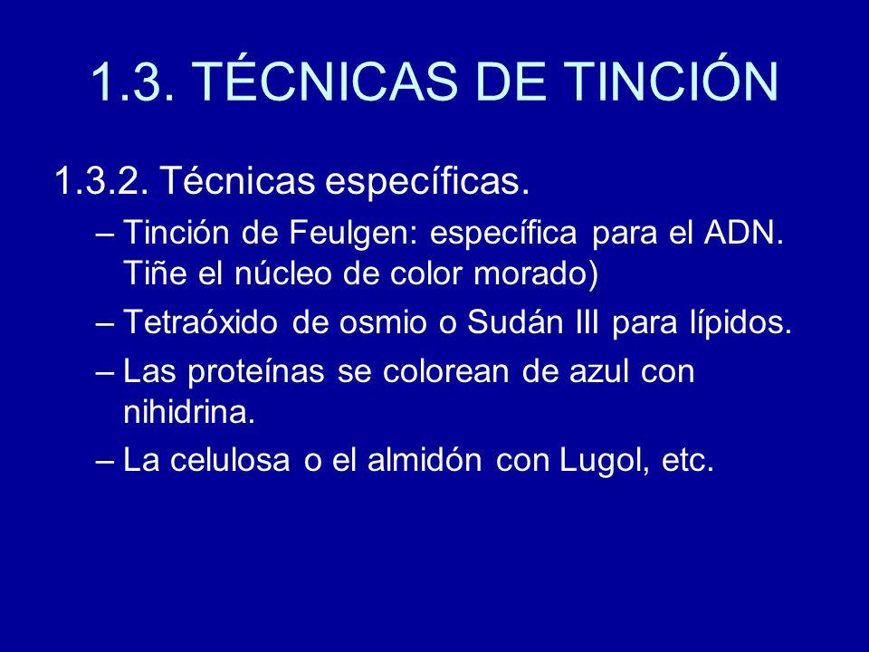 1.3. TÉCNICAS DE TINCIÓN 1.3.2. Técnicas específicas. –Tinción de Feulgen: específica para el ADN. Tiñe el núcleo de color morado) –Tetraóxido de osmi