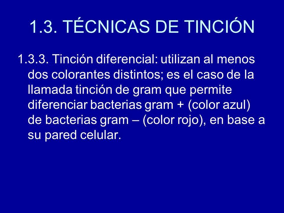1.3. TÉCNICAS DE TINCIÓN 1.3.3. Tinción diferencial: utilizan al menos dos colorantes distintos; es el caso de la llamada tinción de gram que permite