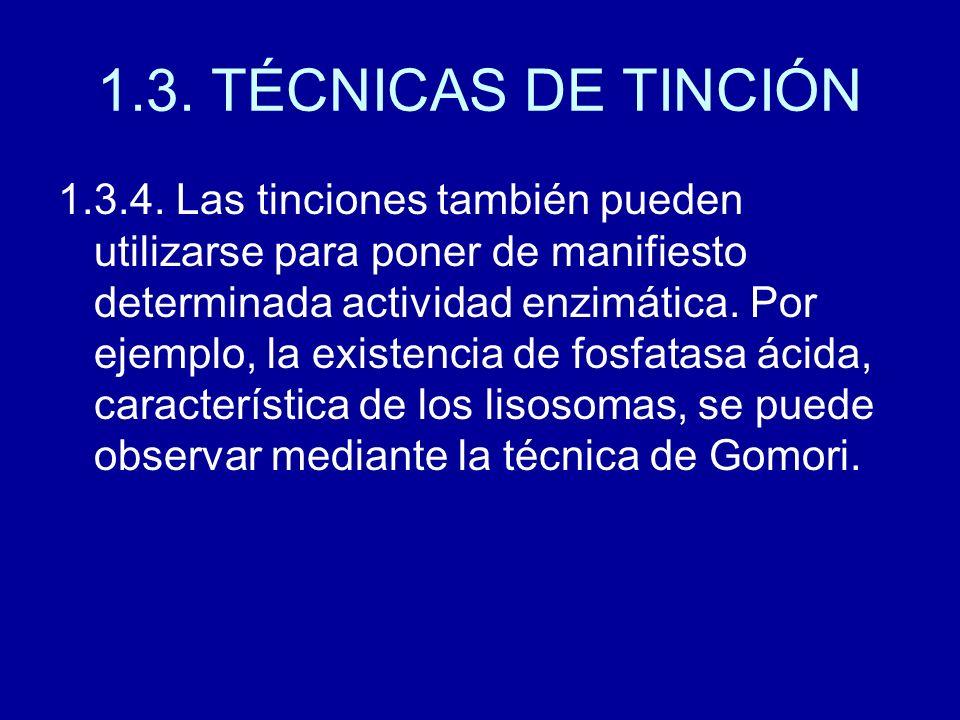 1.3. TÉCNICAS DE TINCIÓN 1.3.4. Las tinciones también pueden utilizarse para poner de manifiesto determinada actividad enzimática. Por ejemplo, la exi