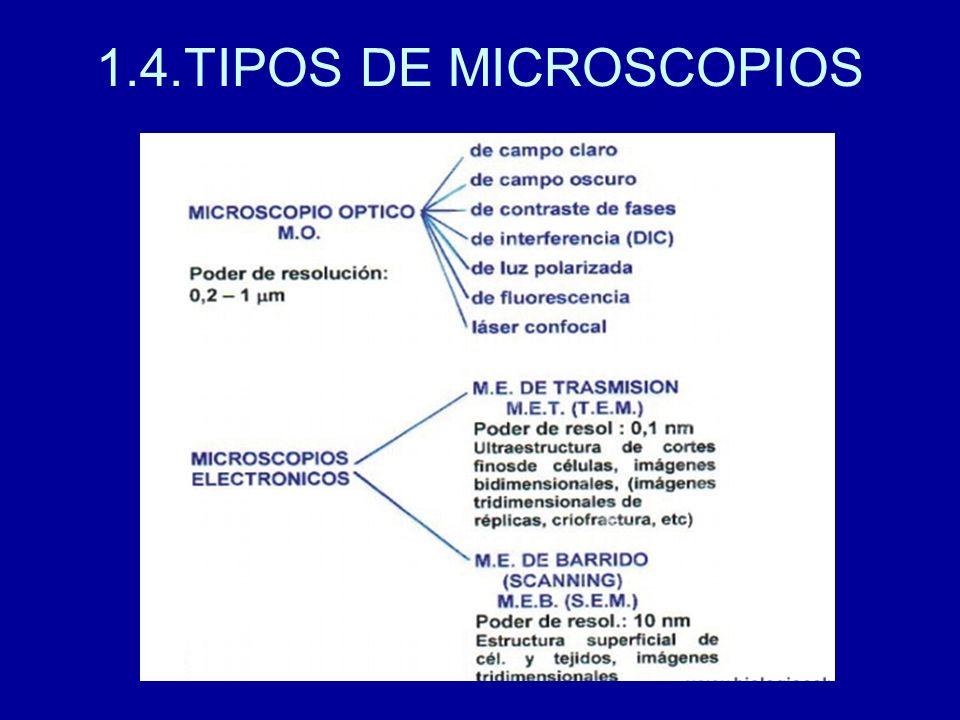1.4.TIPOS DE MICROSCOPIOS