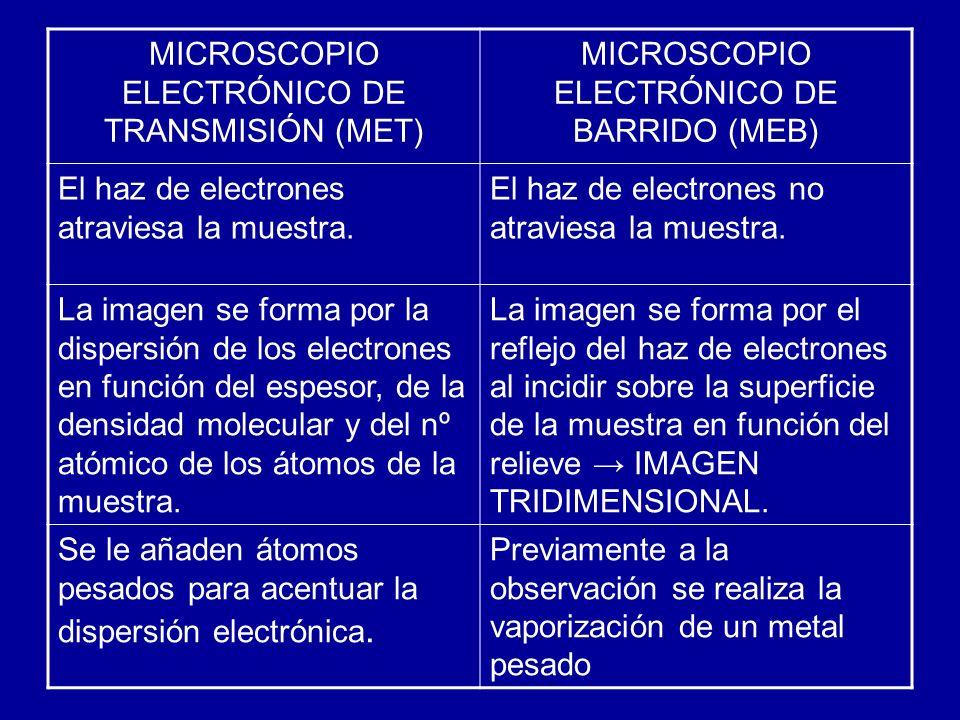 MICROSCOPIO ELECTRÓNICO DE TRANSMISIÓN (MET) MICROSCOPIO ELECTRÓNICO DE BARRIDO (MEB) El haz de electrones atraviesa la muestra. El haz de electrones