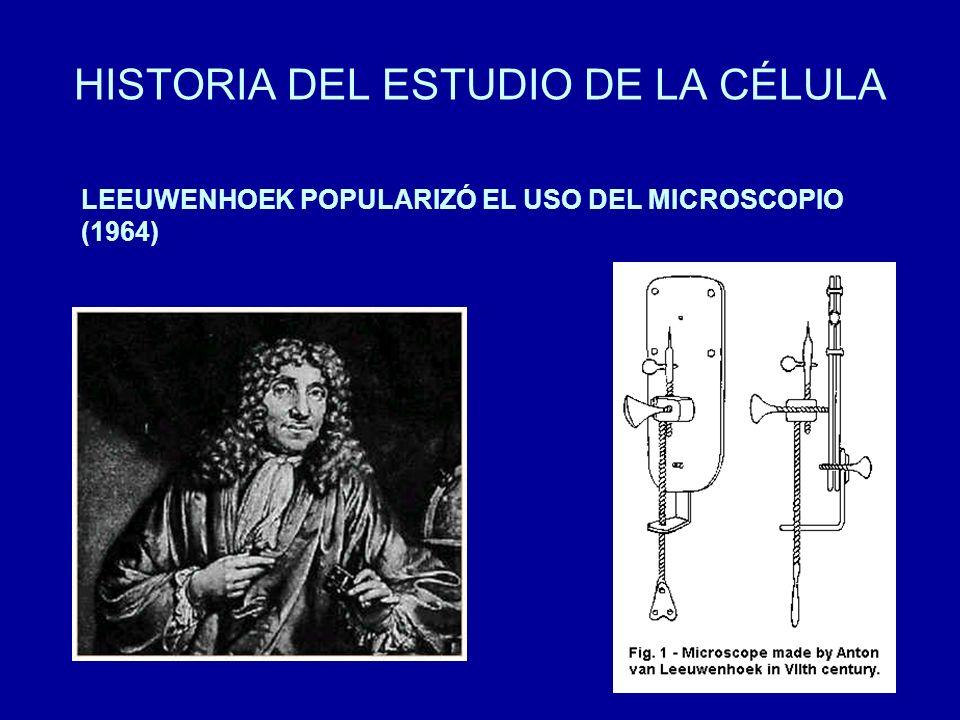 HISTORIA DEL ESTUDIO DE LA CÉLULA LEEUWENHOEK POPULARIZÓ EL USO DEL MICROSCOPIO (1964)
