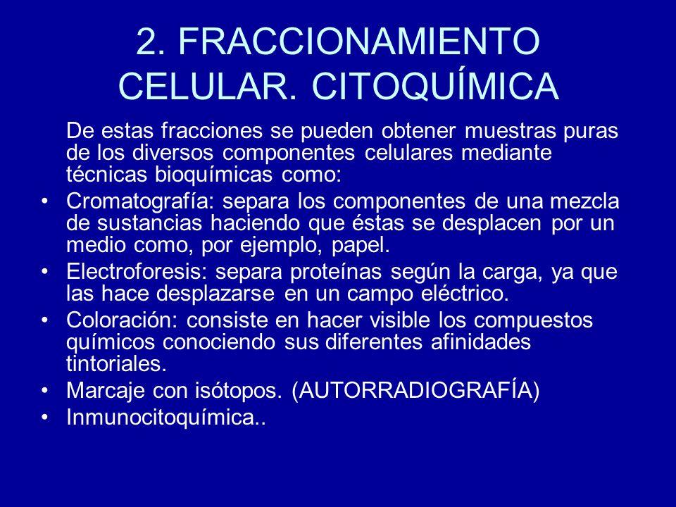 2. FRACCIONAMIENTO CELULAR. CITOQUÍMICA De estas fracciones se pueden obtener muestras puras de los diversos componentes celulares mediante técnicas b