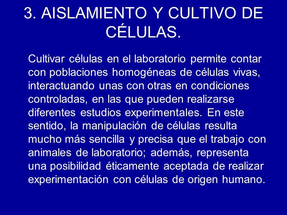 3. AISLAMIENTO Y CULTIVO DE CÉLULAS. Cultivar células en el laboratorio permite contar con poblaciones homogéneas de células vivas, interactuando unas