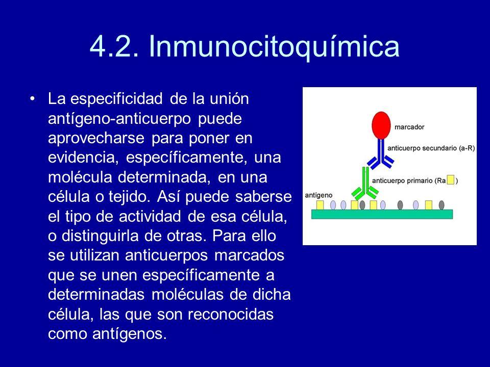 4.2. Inmunocitoquímica La especificidad de la unión antígeno-anticuerpo puede aprovecharse para poner en evidencia, específicamente, una molécula dete