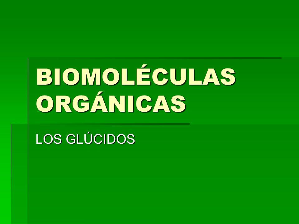 BIOMOLÉCULAS ORGÁNICAS LOS GLÚCIDOS