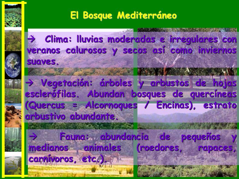 Vegetación: árboles y arbustos de hojas esclerófilas. Abundan bosques de quercíneas (Quercus = Alcornoques / Encinas), estrato arbustivo abundante. Ve