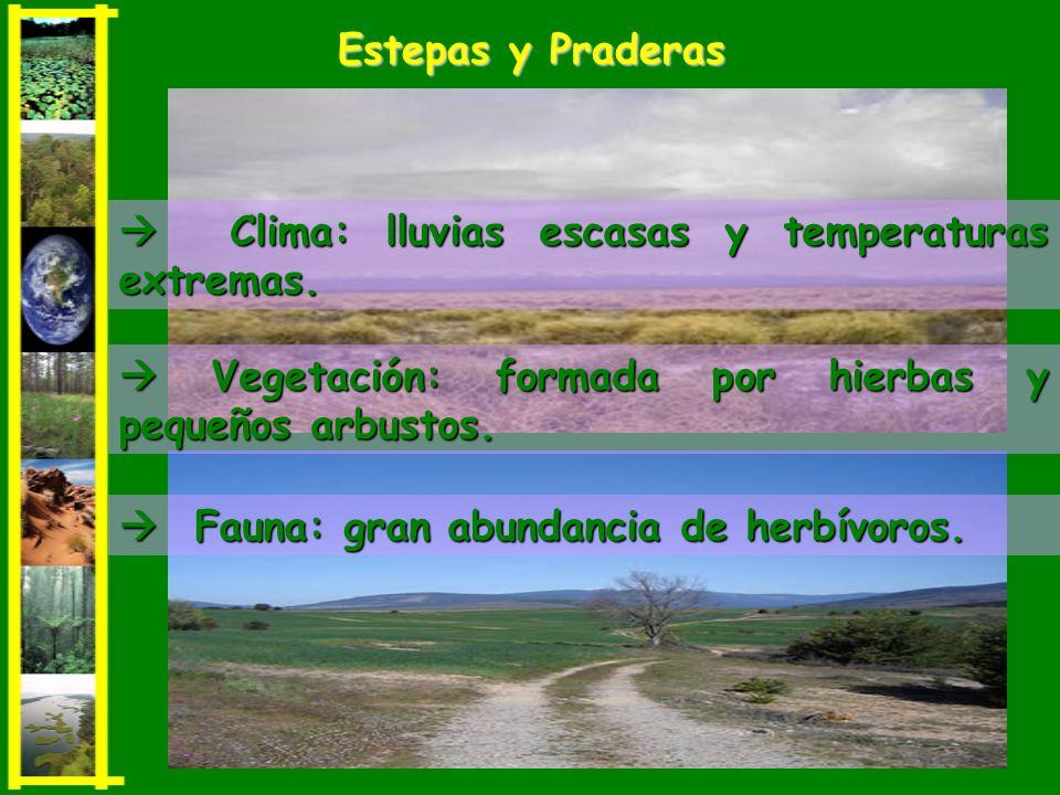 Vegetación: formada por hierbas y pequeños arbustos. Vegetación: formada por hierbas y pequeños arbustos. Clima: lluvias escasas y temperaturas extrem