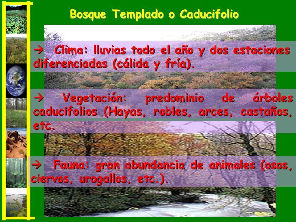 Vegetación: predominio de árboles caducifolios (Hayas, robles, arces, castaños, etc. Vegetación: predominio de árboles caducifolios (Hayas, robles, ar