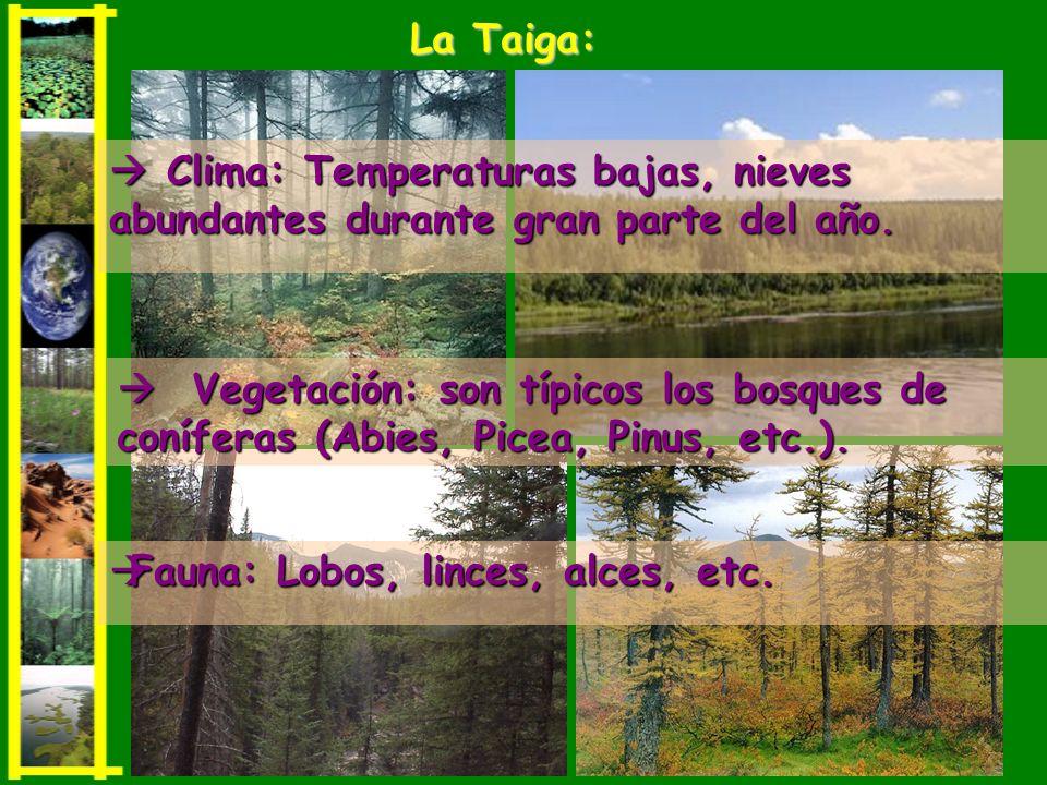 Clima: Temperaturas bajas, nieves abundantes durante gran parte del año. Clima: Temperaturas bajas, nieves abundantes durante gran parte del año. La T