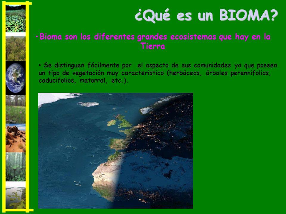 ¿Qué es un BIOMA? Se distinguen fácilmente por el aspecto de sus comunidades ya que poseen un tipo de vegetación muy característico (herbáceos, árbole