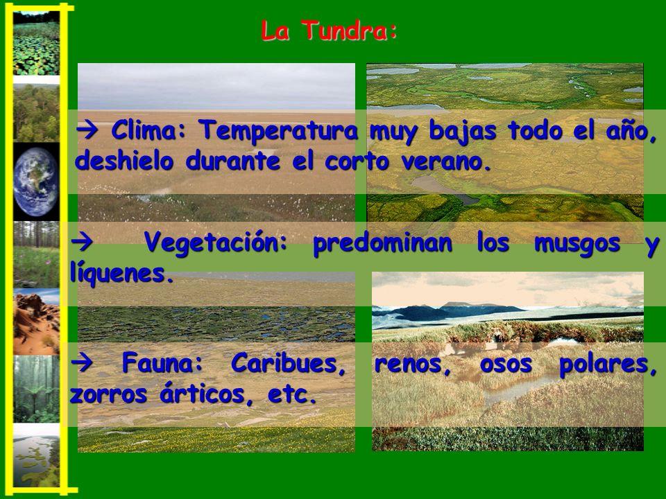 Clima: Temperatura muy bajas todo el año, deshielo durante el corto verano. Clima: Temperatura muy bajas todo el año, deshielo durante el corto verano