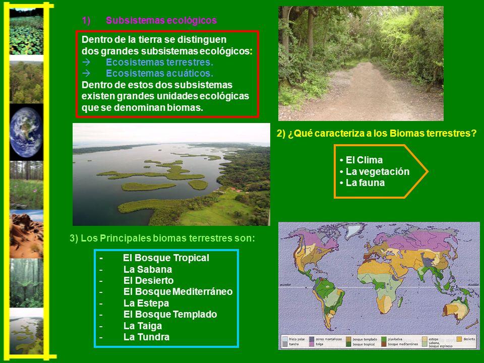2) ¿Qué caracteriza a los Biomas terrestres? El Clima La vegetación La fauna - El Bosque Tropical -La Sabana -El Desierto -El Bosque Mediterráneo -La