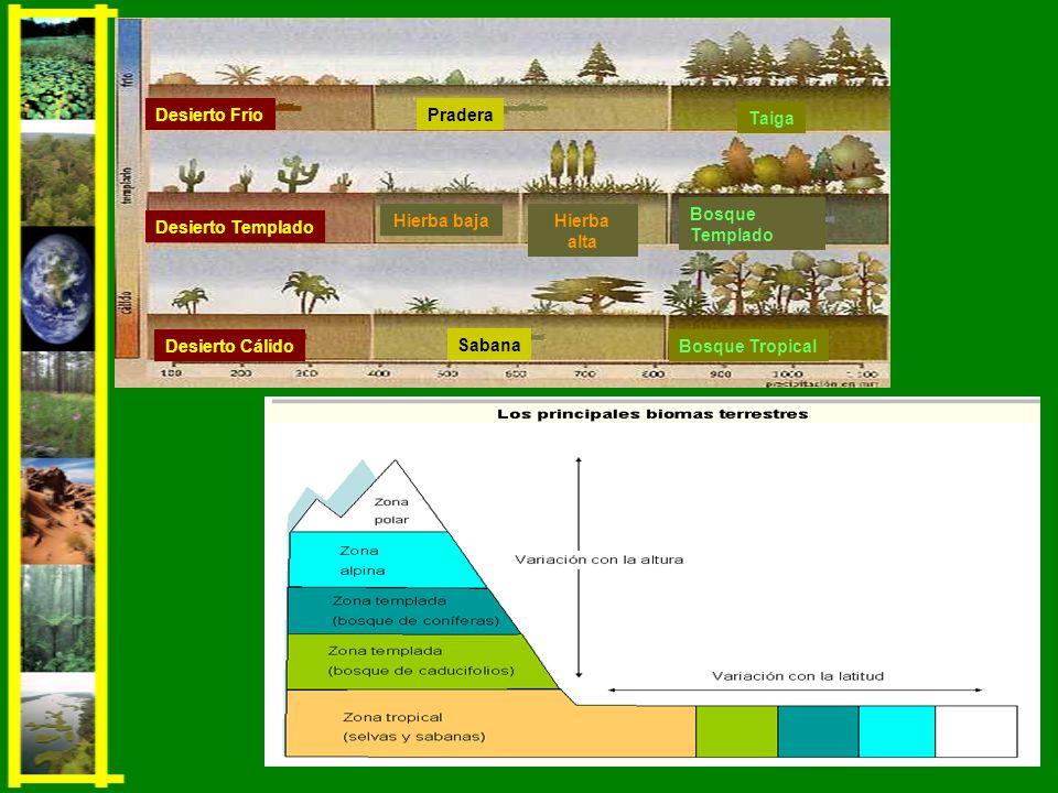 Vegetación: formada por hierbas y pequeños arbustos.