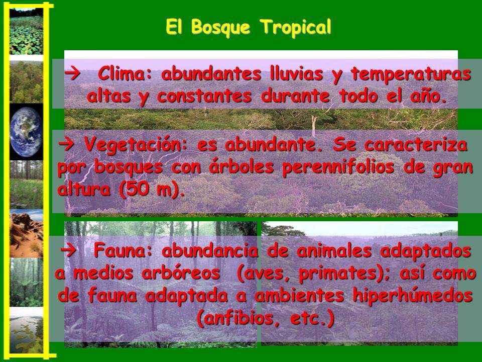 Vegetación: es abundante. Se caracteriza por bosques con árboles perennifolios de gran altura (50 m). Vegetación: es abundante. Se caracteriza por bos