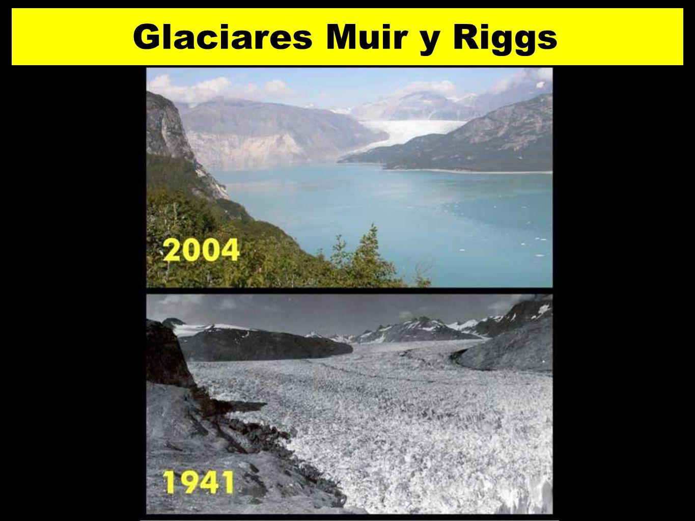 28 Glaciares Muir y Riggs