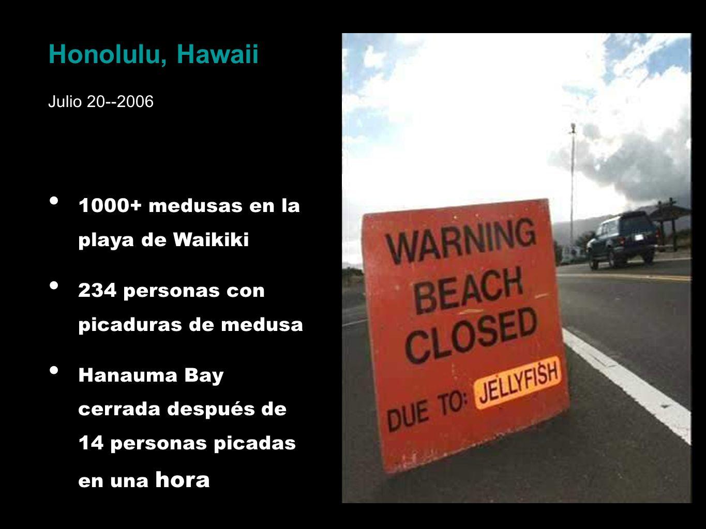 Honolulu, Hawaii Julio 20--2006 1000+ medusas en la playa de Waikiki 234 personas con picaduras de medusa Hanauma Bay cerrada después de 14 personas p