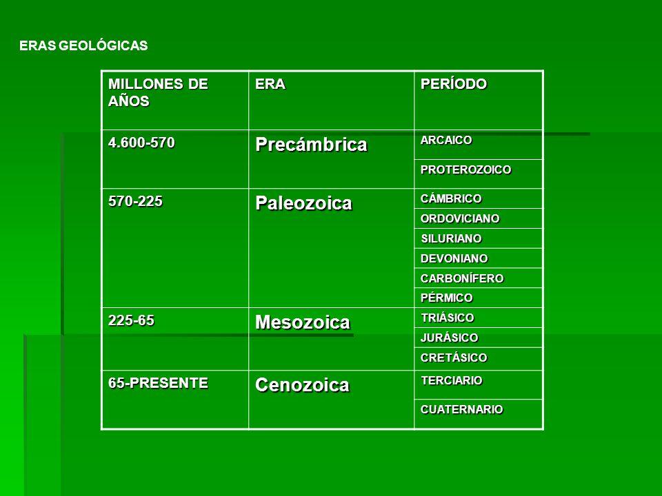 ERAS GEOLÓGICAS MILLONES DE AÑOS ERAPERÍODO 4.600-570PrecámbricaARCAICO PROTEROZOICO 570-225PaleozoicaCÁMBRICO ORDOVICIANO SILURIANO DEVONIANO CARBONÍ