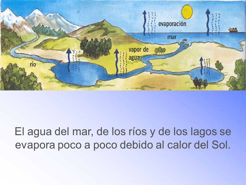 El agua del mar, de los ríos y de los lagos se evapora poco a poco debido al calor del Sol.