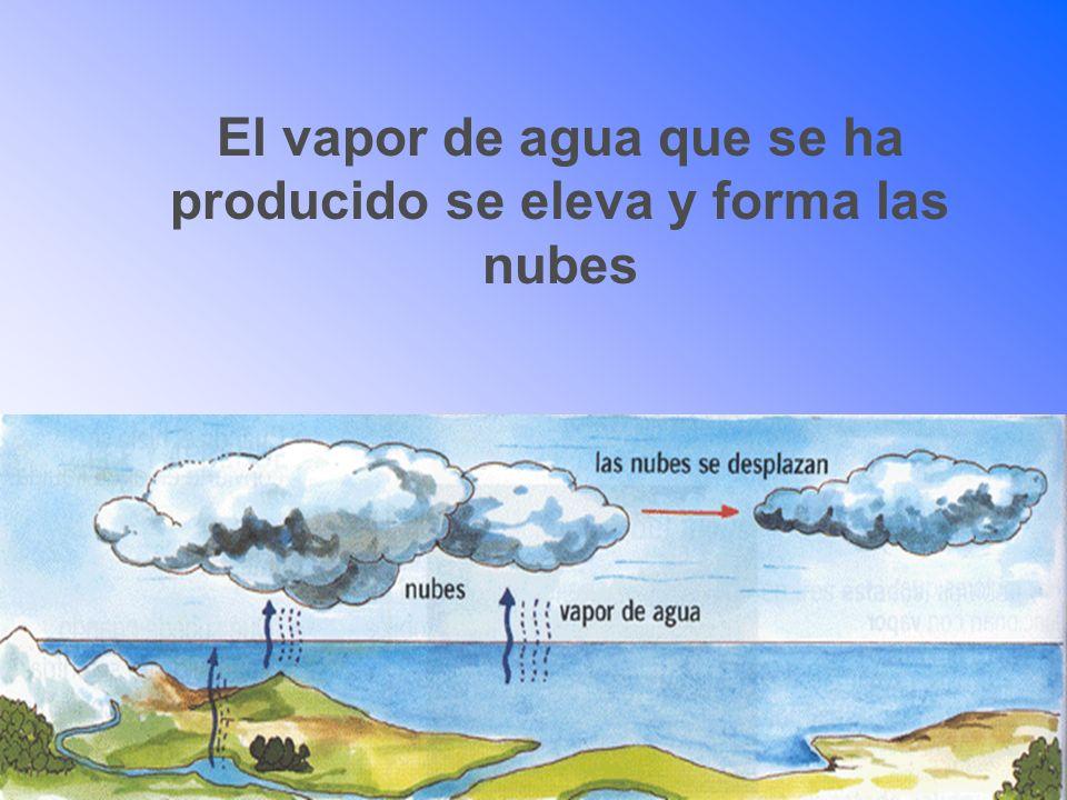 El vapor de agua que se ha producido se eleva y forma las nubes