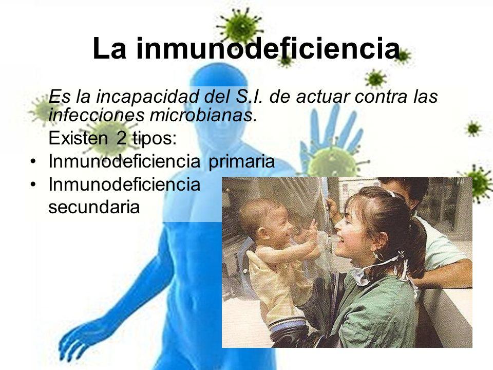 La inmunodeficiencia Es la incapacidad del S.I. de actuar contra las infecciones microbianas. Existen 2 tipos: Inmunodeficiencia primaria Inmunodefici