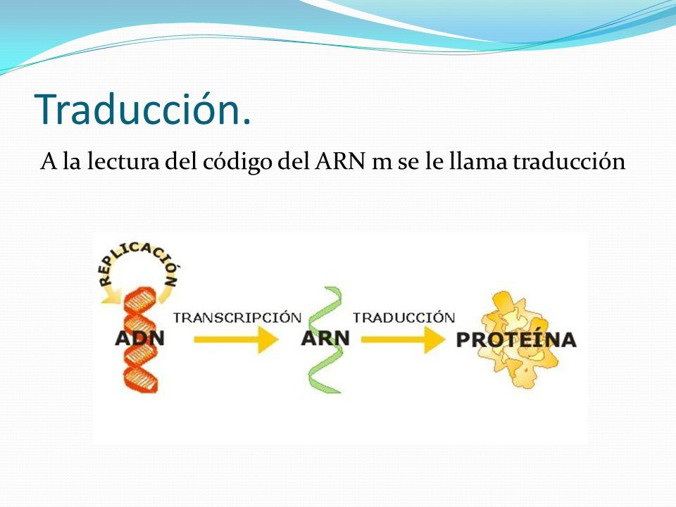 Síntesis de proteínas.
