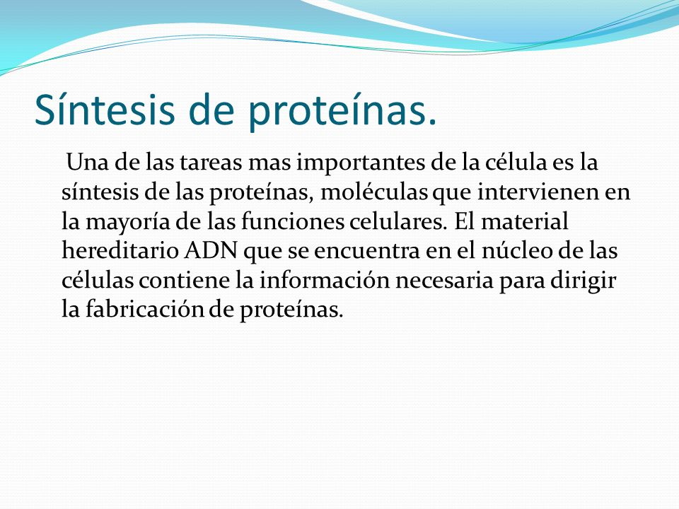 Síntesis de proteínas. Una de las tareas mas importantes de la célula es la síntesis de las proteínas, moléculas que intervienen en la mayoría de las