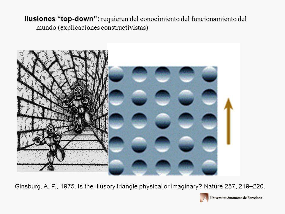 ¿Qué cosas nos dice sobre la percepción del movimiento estas dos ilusiones? El movimiento es una dimensión fundamental de la visión y no representa un