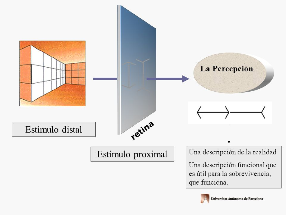retina Estímulo distal La Percepción Estímulo proximal Una descripción de la realidad Una descripción funcional que es útil para la sobrevivencia, que funciona.