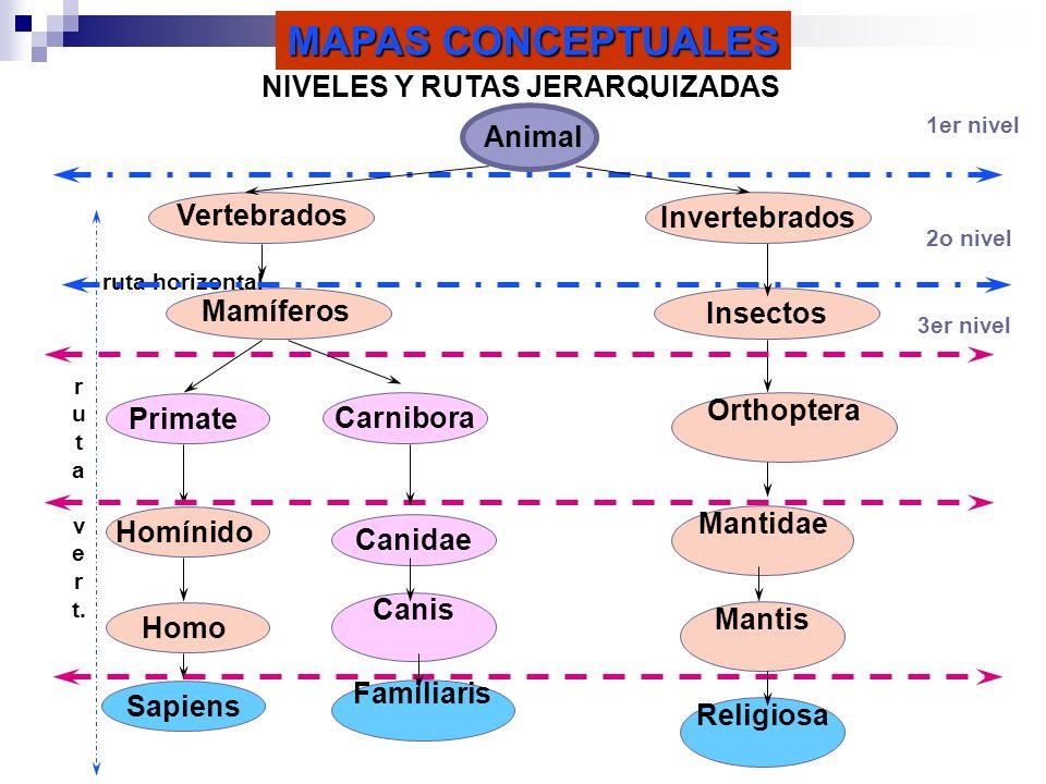 Insectos MAPAS CONCEPTUALES NIVELES Y RUTAS JERARQUIZADAS Primate Homínido Sapiens Orthoptera Vertebrados Mantis Mantidae Animal 1er nivel 2o nivel 3e