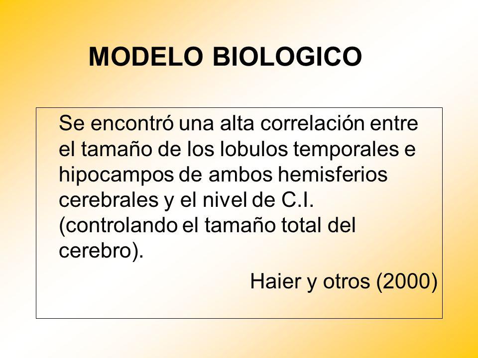 MODELO BIOLOGICO Se encontró una alta correlación entre el tamaño de los lobulos temporales e hipocampos de ambos hemisferios cerebrales y el nivel de