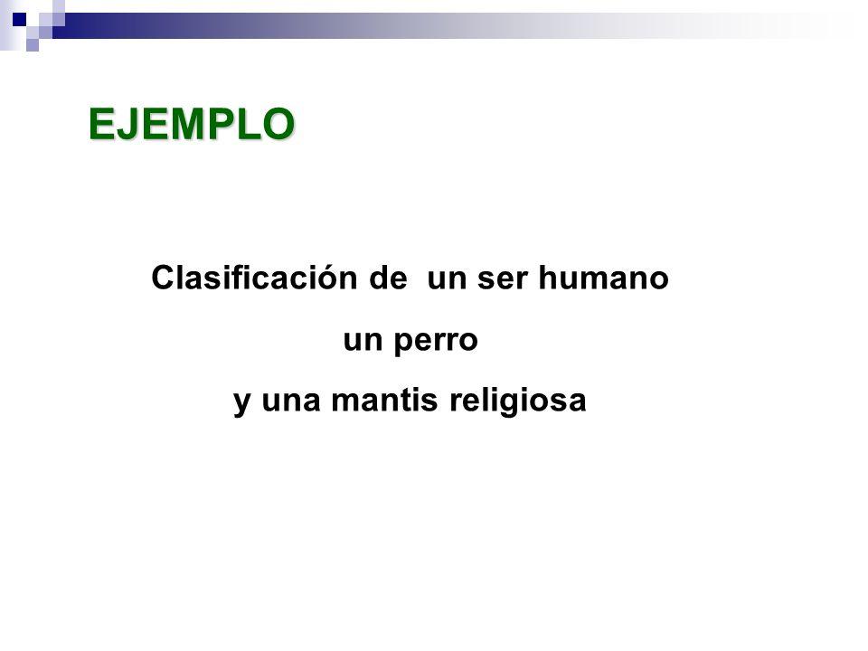 Clasificación de un ser humano un perro y una mantis religiosa EJEMPLO