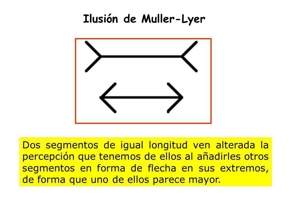Ilusión de Muller-Lyer Dos segmentos de igual longitud ven alterada la percepción que tenemos de ellos al añadirles otros segmentos en forma de flecha
