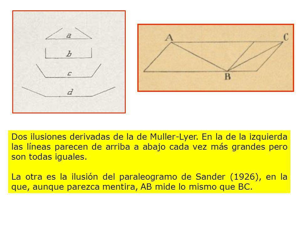 Dos ilusiones derivadas de la de Muller-Lyer. En la de la izquierda las líneas parecen de arriba a abajo cada vez más grandes pero son todas iguales.
