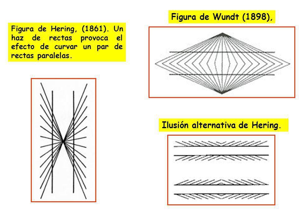 Ilusión alternativa de Hering. Figura de Hering, (1861). Un haz de rectas provoca el efecto de curvar un par de rectas paralelas. Figura de Wundt (189