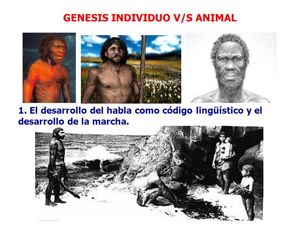GENESIS INDIVIDUO V/S ANIMAL 1. El desarrollo del habla como código lingüístico y el desarrollo de la marcha.