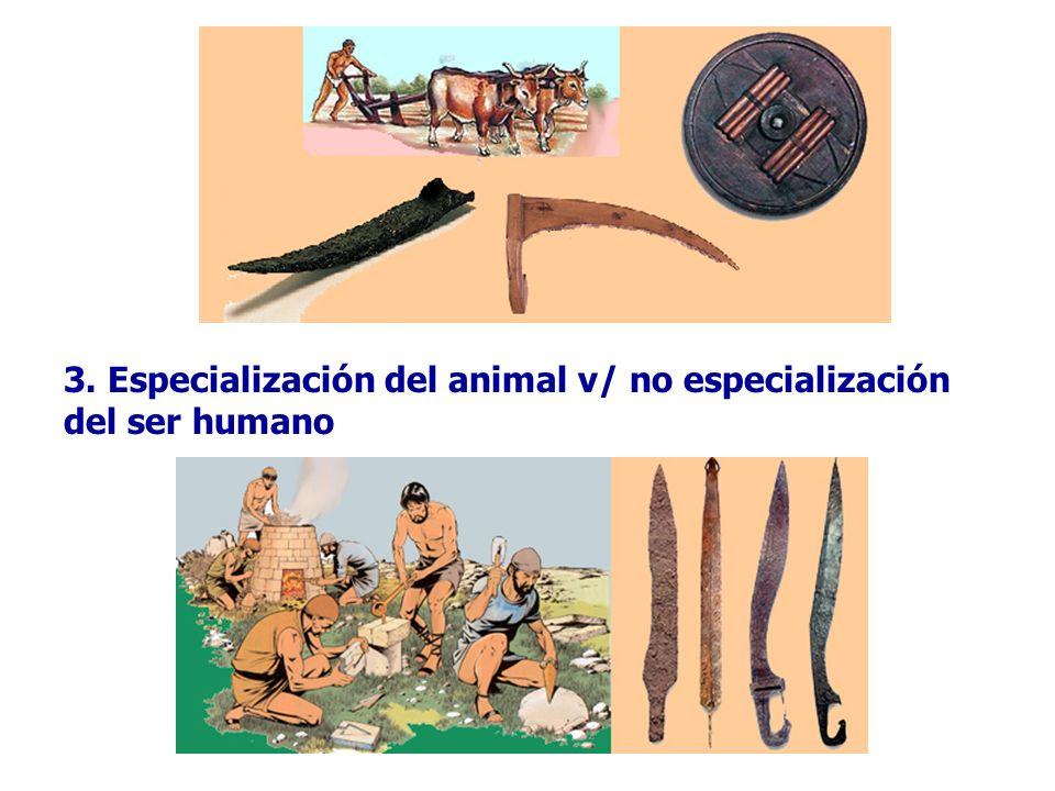 3. Especialización del animal v/ no especialización del ser humano