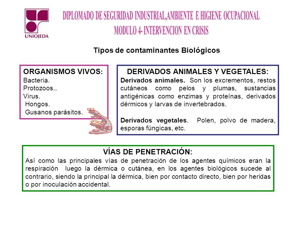 Tipos de contaminantes Biológicos ORGANISMOS VIVOS : Bacteria. Protozoos.. Virus. Hongos. Gusanos parásitos. DERIVADOS ANIMALES Y VEGETALES: Derivados