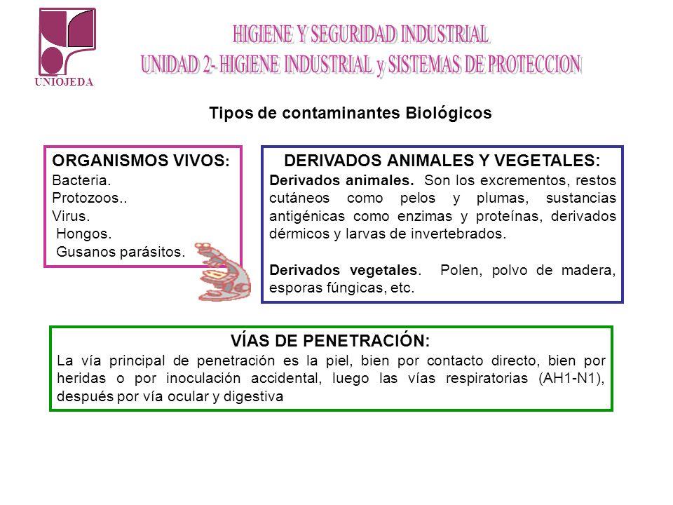 UNIOJEDA Tipos de contaminantes Biológicos ORGANISMOS VIVOS : Bacteria. Protozoos.. Virus. Hongos. Gusanos parásitos. DERIVADOS ANIMALES Y VEGETALES: