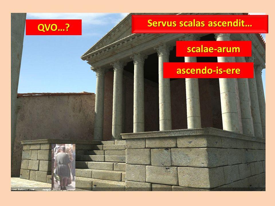 QVO…? scalae-arum ascendo-is-ere Servus scalas ascendit…