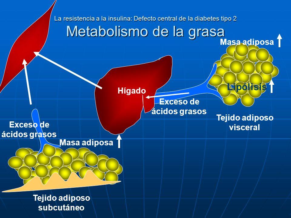 La resistencia a la insulina: Defecto central de la diabetes tipo 2 Metabolismo de la grasa Tejido adiposo subcutáneo Tejido adiposo visceral Hígado E