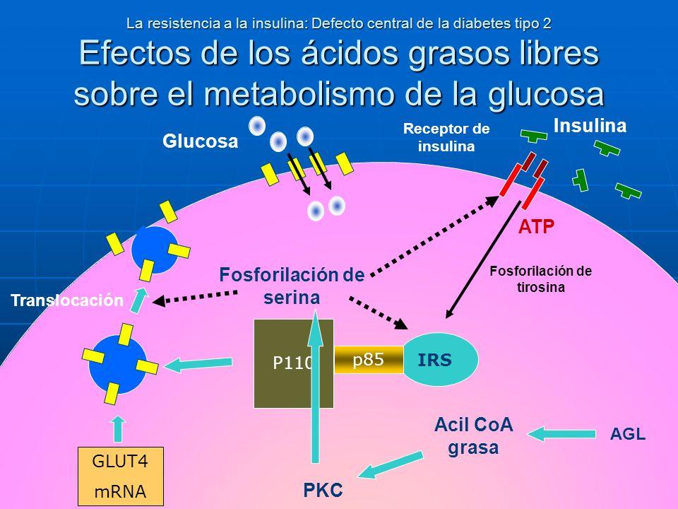 La resistencia a la insulina: Defecto central de la diabetes tipo 2 Efectos de los ácidos grasos libres sobre el metabolismo de la glucosa Glucosa Ins