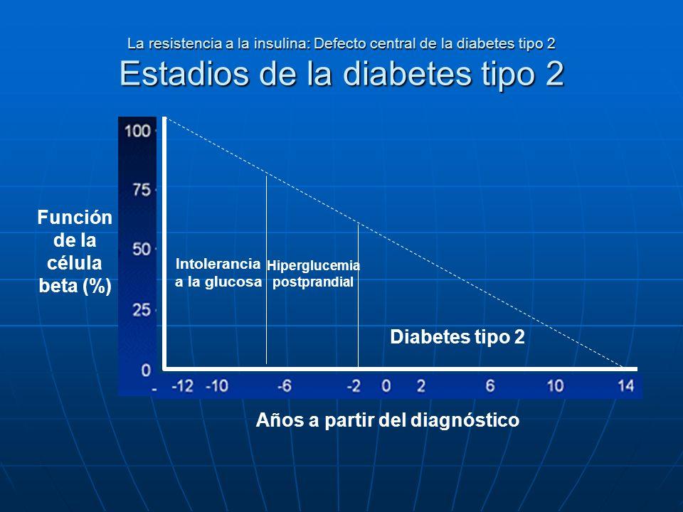 La resistencia a la insulina: Defecto central de la diabetes tipo 2 Estadios de la diabetes tipo 2 Función de la célula beta (%) Años a partir del dia