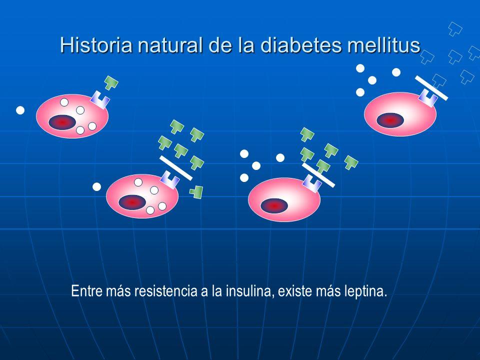 Historia natural de la diabetes mellitus Entre más resistencia a la insulina, existe más leptina.